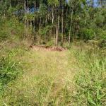 LOTE 001 - Uma área de terras em Paverama/RS